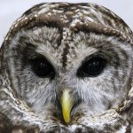 Killing Owls to Save Owls: You Can't Make This Up